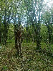Čudna šuma..